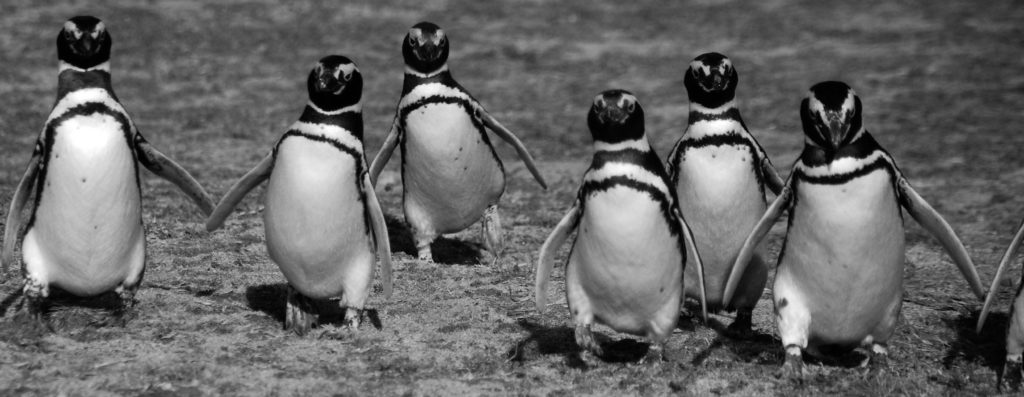 penguins wildlife